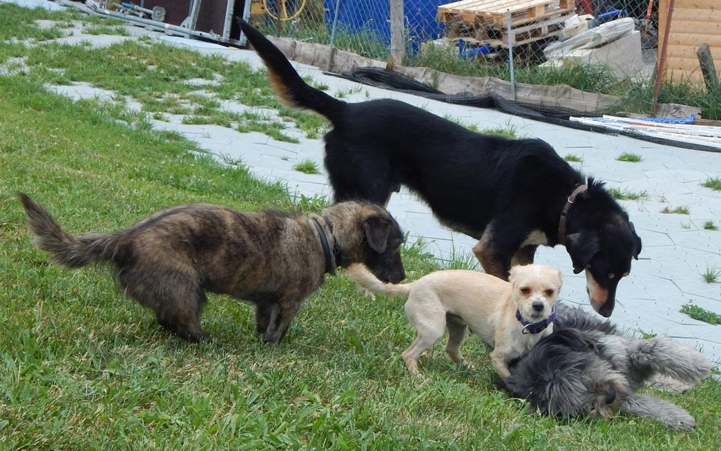 aufgebissen rücken bei hunde